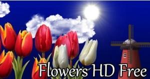 download best HD live wallpaper